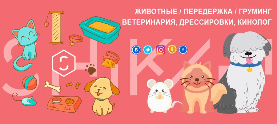 """Новая категория """"Услуги для животных"""" + промо-код"""